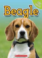 Beagle (Top Dogs) Animals